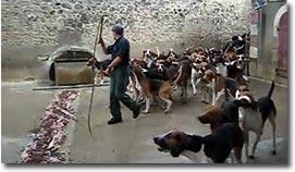 100 Hunde gleichzeitig füttern