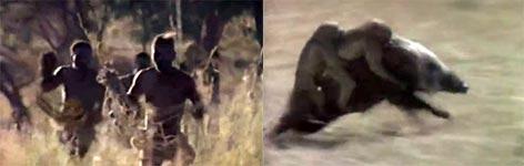 Affen, Schweine, Afrika