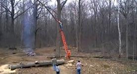 Motorsäge, Baum