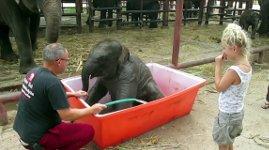 Baby Elefant Badewanne