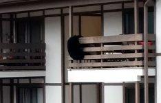Bär Balkon