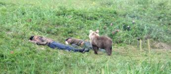 Bär schlafende Männer