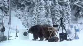 Bär, Waschmaschine