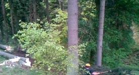 Holzfällerdomino, Baum fällen