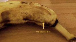 Banane Spinne