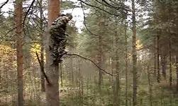 Russland, Baum, Sprungtuch