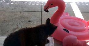 Bär gegen Flamingo