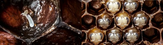 Biene Geburt Zeitraffer