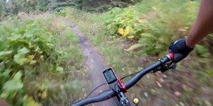 Bär im Weg Bike