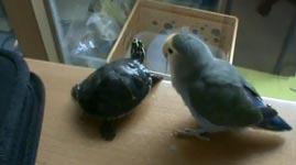 Papagei, Schildkröte, Turtle, Bird