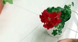 hängender Blumentopf Seil