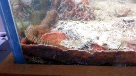Bristle Worm Aquarium