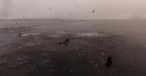 buckelwal, taucher