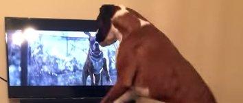 Hund liebt Werbespot