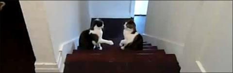 Katzen, Boxen