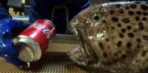 Catfish vs Coke