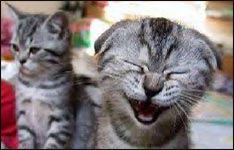 lachende Katze, funny