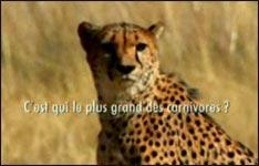 Gepard, Gazelle, Video, lustig