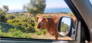 Kuh Auskunft Richtung Bolinia