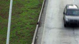 verückte Ente auf der Autobahn