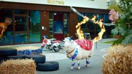 Schaaf B&B Hotels Feuerreif
