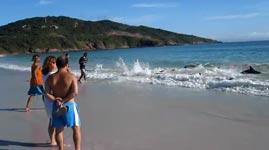 Delfin, Rettung, Menschen, Strand