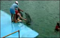 delphintherapie, delphin therapie türkei, florida, spanien