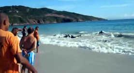 Delfin, Rettung, Brasilien