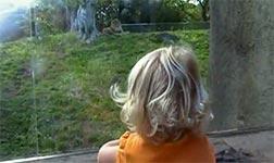 löwen, tierpark, zoo, tiere, kind, weinen