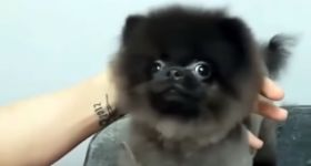 Hund Friseur Ducktales