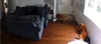 Staubsauger, Hund, irobot roomba