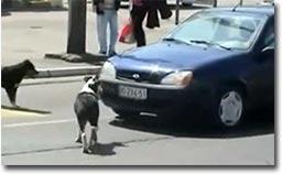Hund, Auto, Nummernschild