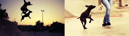 Dogboarding, Skateboard, skateboarding
