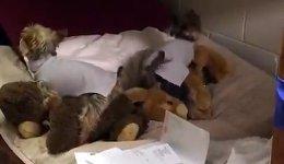 Hunde Bett poppen Kuscheltiere
