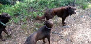 Hunde still stehen