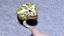 Frosch Kröte anfassen