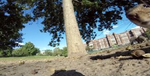 Eichhörnchen GoPro POV