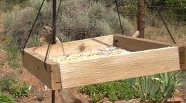 Eichhörnchen Vaseline