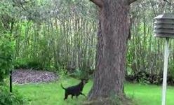 hund, eichhörnchen, baum