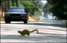Hinterlistige Eichhörnchen