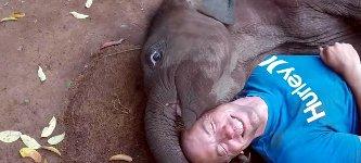 Elefant kuscheln