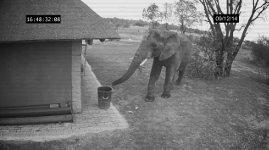 Elefant Müll Mülleimer