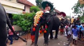 Elefant tritt Mensch
