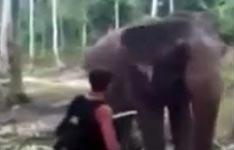 elefant, mann