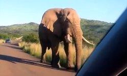 Elefant kuschelt mit Auto Windschutzscheibe