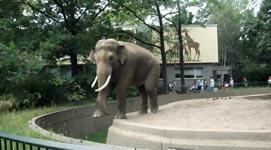 Elephant, Kot, Scheiße, Zoo