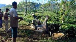 Elefant Rettung