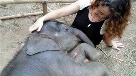 Elefant schlafen Schoß