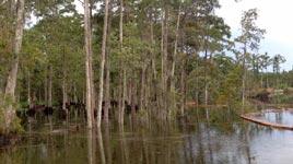 Erdloch verschluckt Bäume