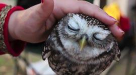 eule streicheln, owl petting